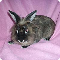 Adopt A Pet :: Tinkerbelle - Williston, FL