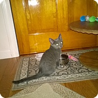 Adopt A Pet :: Nate - Speonk, NY