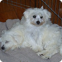 Adopt A Pet :: PUPPIES~ADOPTED! - North Vancouver, BC