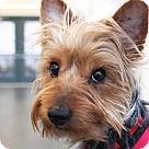 Adopt A Pet :: Edward