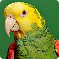Adopt A Pet :: Dallas - Asheville, NC