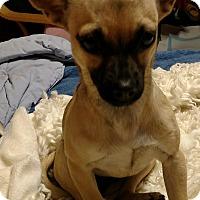 Adopt A Pet :: Kelly - San Diego, CA