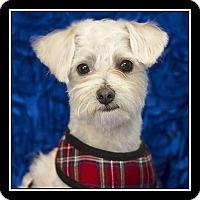 Adopt A Pet :: Rocco - San Diego, CA