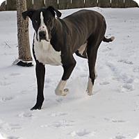 Adopt A Pet :: Toby - O'Fallon, MO