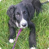 Adopt A Pet :: Henley - Staunton, VA