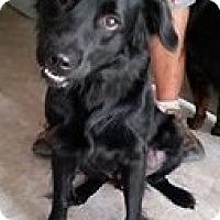 Adopt A Pet :: Fred - Gainesville, FL
