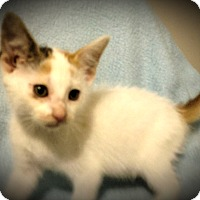 Adopt A Pet :: Korinne - Fairborn, OH
