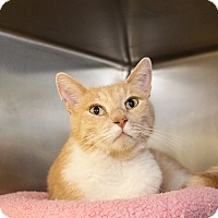 Adopt A Pet :: Tom Hanks - Seville, OH