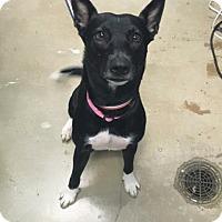 Adopt A Pet :: Maycee - New Braunfels, TX
