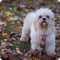 Adopt A Pet :: Hope: Adoption Pending - Verona, NJ