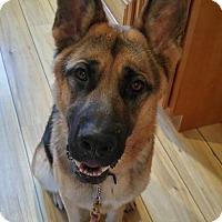 Adopt A Pet :: Hans / ADOPTION PENDING - Woodinville, WA