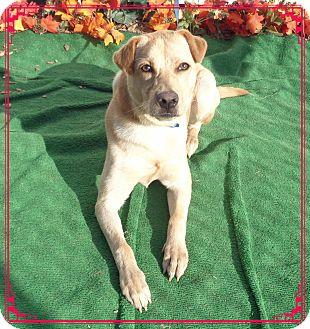 Labrador Retriever Mix Dog for adoption in Marietta, Georgia - TIKO (R)