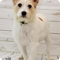 Adopt A Pet :: ANNIE - Tomball, TX