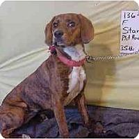 Adopt A Pet :: Star/Pending - Zanesville, OH