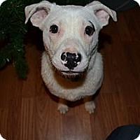 Adopt A Pet :: Casper - Knoxville, TN