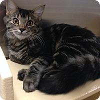 Adopt A Pet :: Echo - Gilbert, AZ