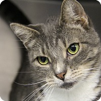 Adopt A Pet :: Skittles - Forked River, NJ