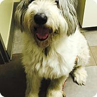Adopt A Pet :: Paschal  Adopted - Tulsa, OK