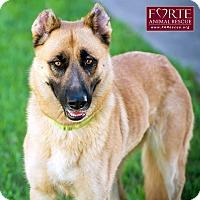 Adopt A Pet :: Audrey - Marina del Rey, CA