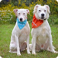 Adopt A Pet :: Chipper and Snow - Fort Valley, GA