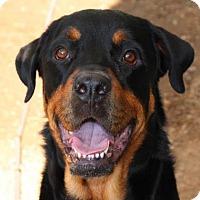 Adopt A Pet :: Titan (Chico) - Austin, TX