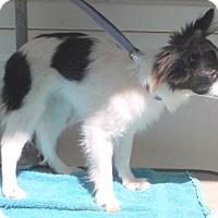 Adopt A Pet :: Sonny - Birch Tree, MO