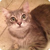 Adopt A Pet :: Snagglepuss - Gainesville, FL