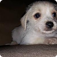 Adopt A Pet :: Biscuit - Tomah, WI