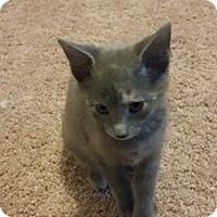 Adopt A Pet :: Mystique - Gainesville, FL