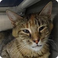 Adopt A Pet :: Tammy - Elyria, OH