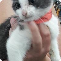 Adopt A Pet :: Jeanie - Wagoner, OK