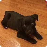 Adopt A Pet :: Xandy - Dallas, TX