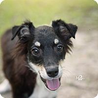 Adopt A Pet :: Cassie - Daleville, AL
