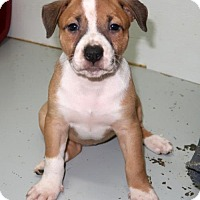 Adopt A Pet :: Halley - Union, CT