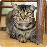 Adopt A Pet :: Captain Jack - Huntsville, AL