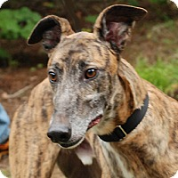 Adopt A Pet :: Luck - Ware, MA