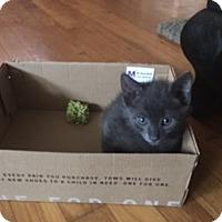 Adopt A Pet :: Oxi - Tampa, FL