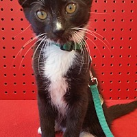 Adopt A Pet :: Tucker - Walnut Creek, CA