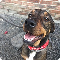 Adopt A Pet :: Hank - Indianapolis, IN