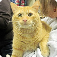 Adopt A Pet :: Buddy - Overland Park, KS