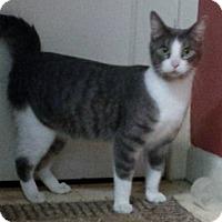 Adopt A Pet :: Amity - Kalamazoo, MI