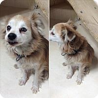 Adopt A Pet :: Missy - Minneapolis, MN