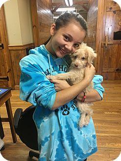 Terrier (Unknown Type, Small) Mix Puppy for adoption in Bowdon, Georgia - Kri