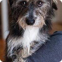 Adopt A Pet :: Lenny - Matthews, NC