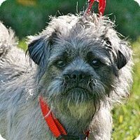Adopt A Pet :: Maddie - Carlsbad, CA