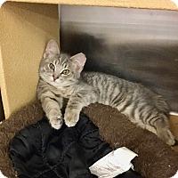 Adopt A Pet :: Joy - Colmar, PA