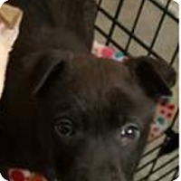 Adopt A Pet :: Chandler - Patterson, NY