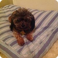Adopt A Pet :: Clarice - Salt Lake City, UT