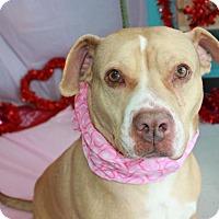 Adopt A Pet :: Dottie - Erwin, TN