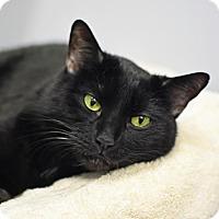 Adopt A Pet :: Odell - Denver, CO